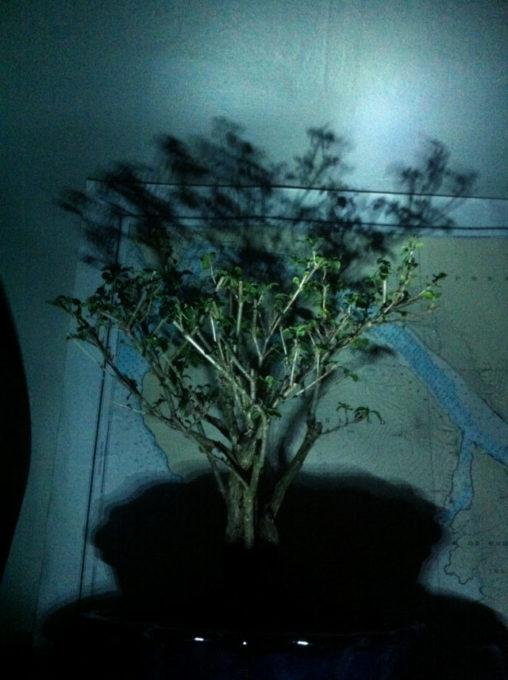 bonsai at night